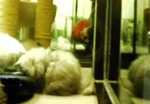 cat_reflection (9k image)