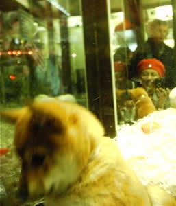 puppy_reflection (13k image)