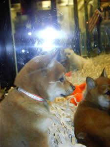 puppy_reflection2 (11k image)